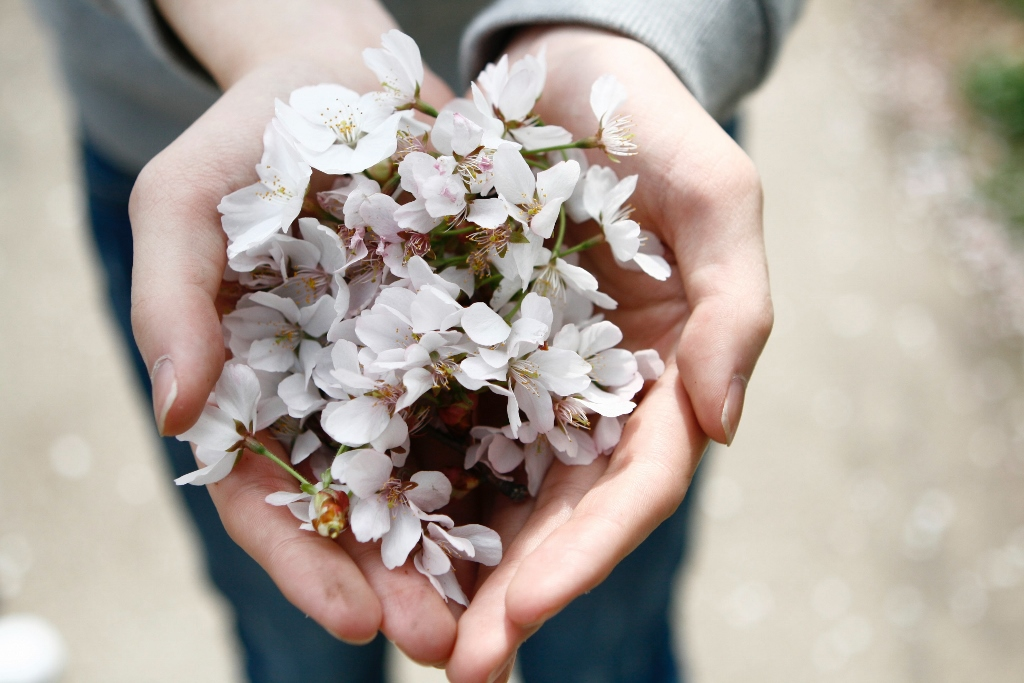 White flowers being held in hands