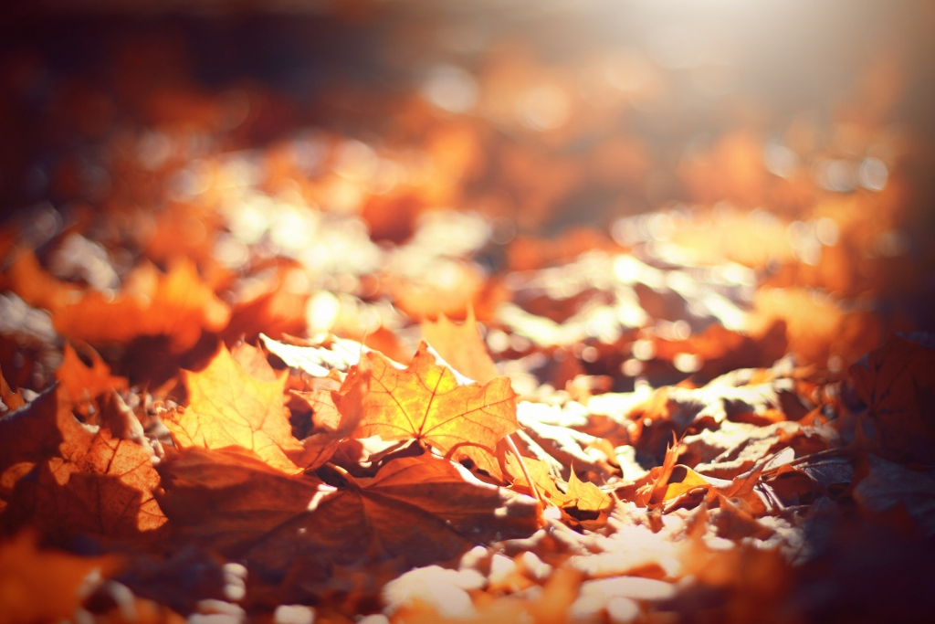 close-up of fall leaves