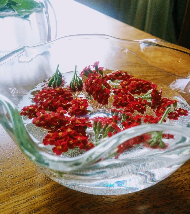 red yarrow flowers in bowl of water